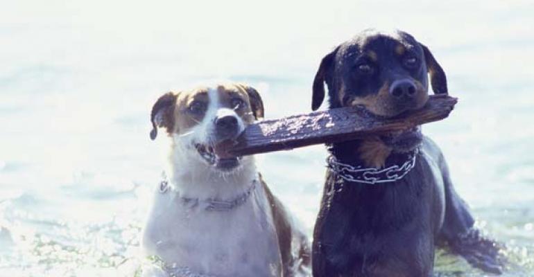 Pet product sales top $11.1 billion