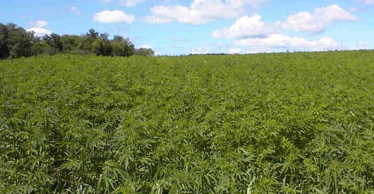 U.S. retail hemp sales soar; when will our farmers grow it?