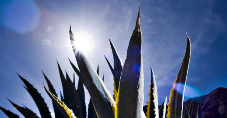 Agave nectar sales gaining 8% a year