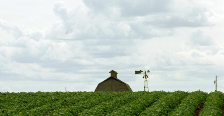 Are biofuels spiking global food, feed prices?