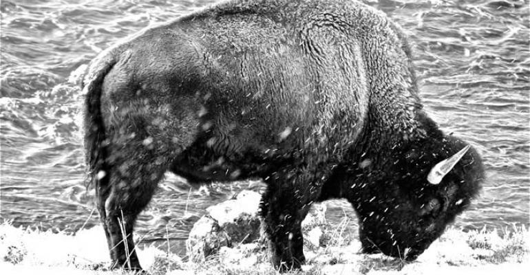 Celebrate National Bison Day on Nov. 1