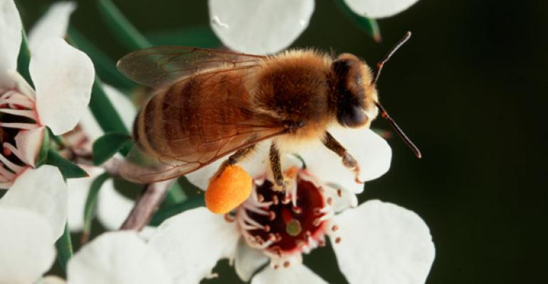 Levi's takes a tip from bees—how can your business learn from nature?