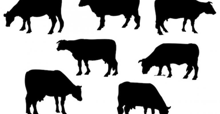 GE cow brings biotech to new level of creepy