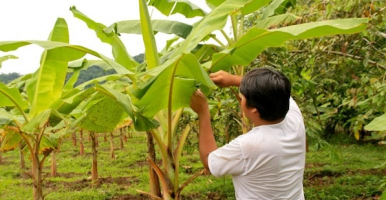 Why fair trade must include domestic supply chains