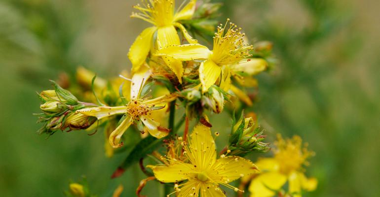 Pharmacists petition FDA to restrict sale of St. John's Wort