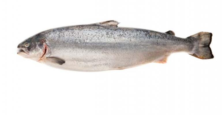 FDA's findings on GMO salmon seem fishy at best