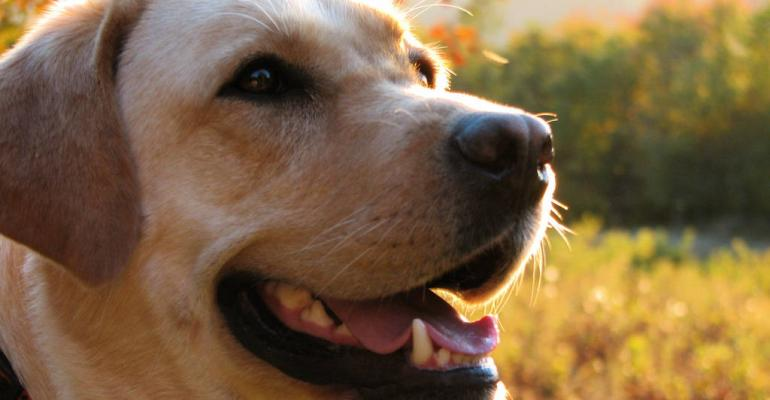 Pioneer Natural Pet Foods expands production capabilities