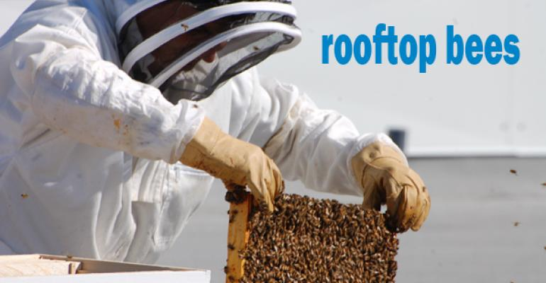 New Seasons Market buzzes with rooftop beehives