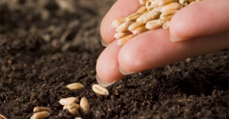 Judge rules in Monsantos favor for patent infringement