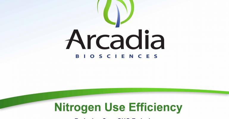 Collaboration test plants nitrogen use-efficient rice