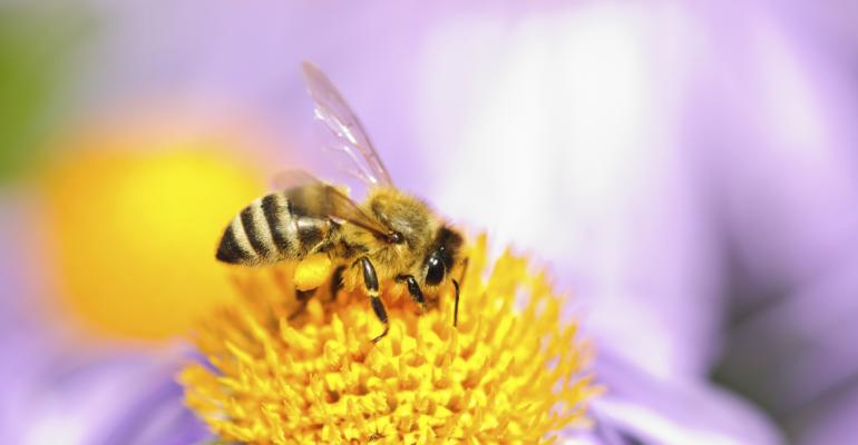 Whats killing our honeybees?