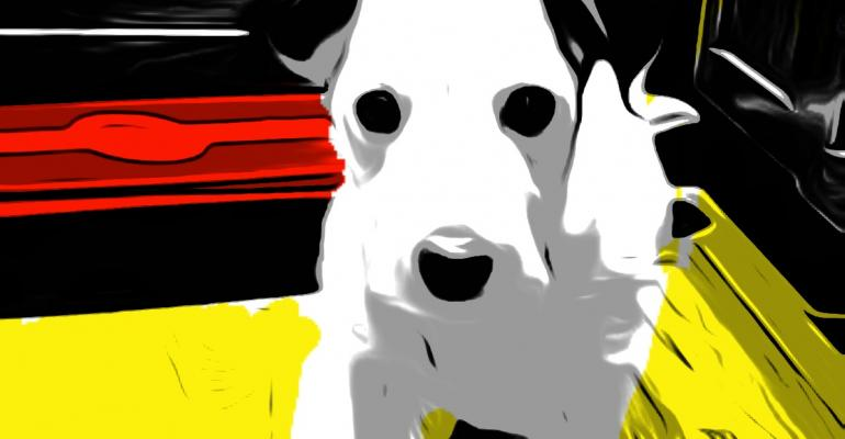 Supplements take hit in the headlines but does Fido care?