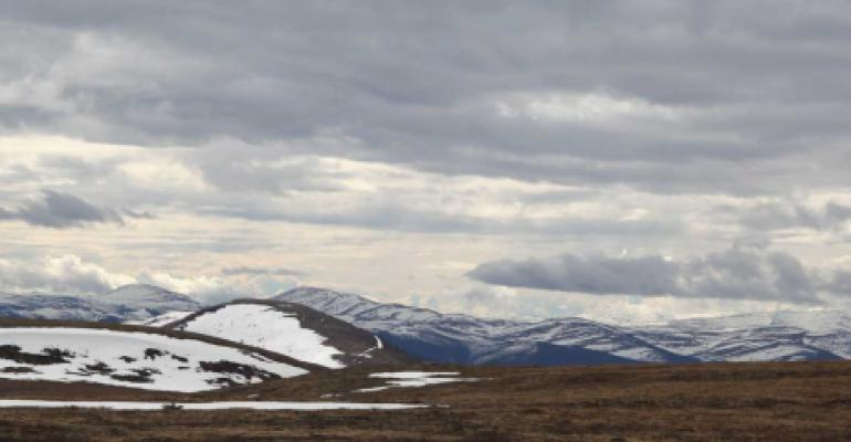 Denali BioTechnologies awarded Alaskan blueberry patent