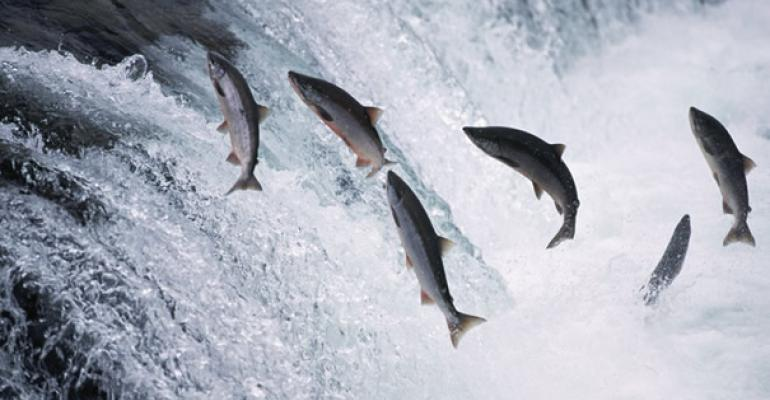 2013 Alaska salmon harvest breaks record