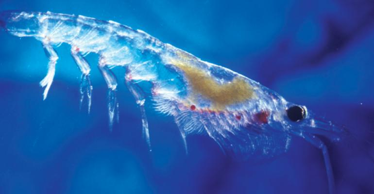 Get schooled on the sustainability of krill