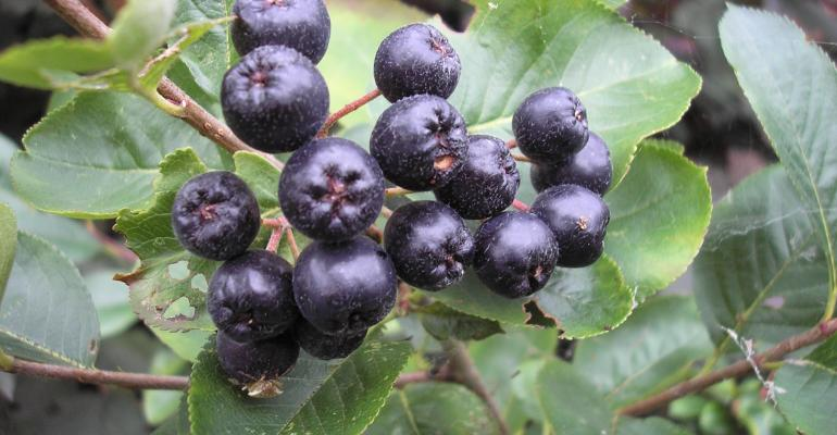 Next big superfruit: aronia berries