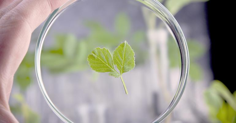 Frutarom debuts phytopharmaceutical ingredients