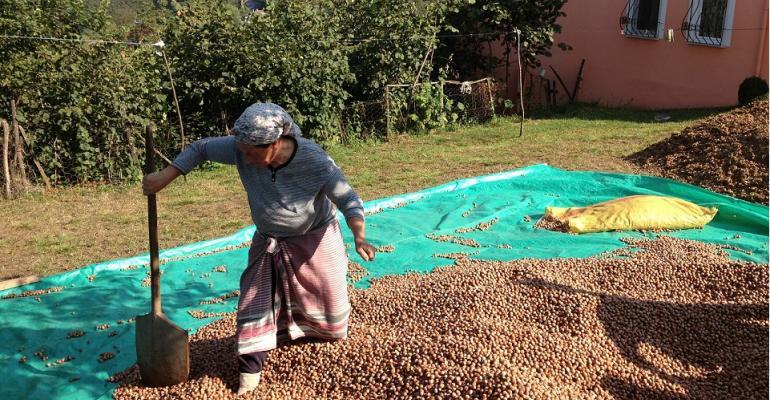 UTZ launches sustainable hazelnut farming initiative