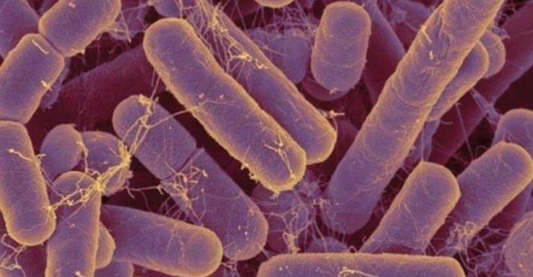 Microbiome revolution to usher in designer foods