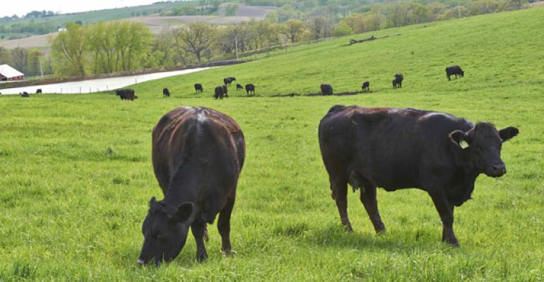 dung beetles play significant role in pasture health