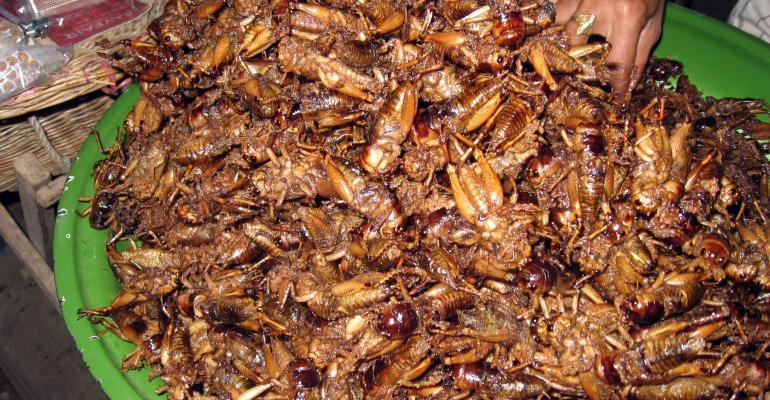 MMMMM   fried crickets