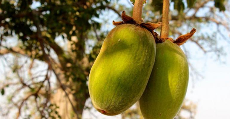 Kaibae baobab products now Non-GMO Project Verified