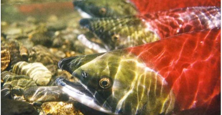 Why Save Our Wild Salmon matters