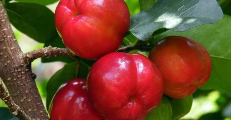 DIANA FOOD adopts acerola through ABC program