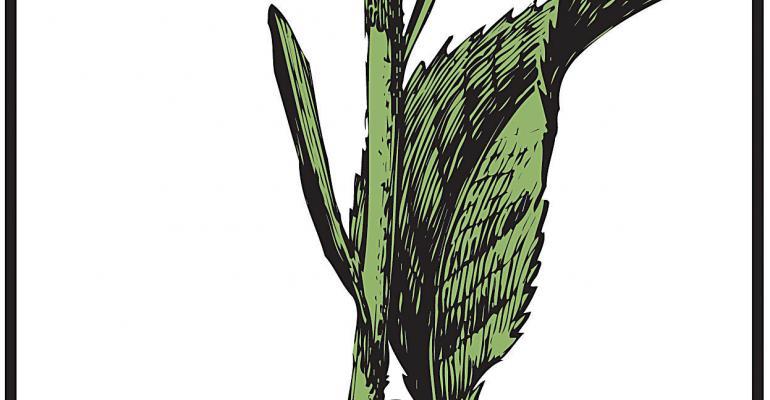 Botanical Adulterants Program debuts laboratory guidance