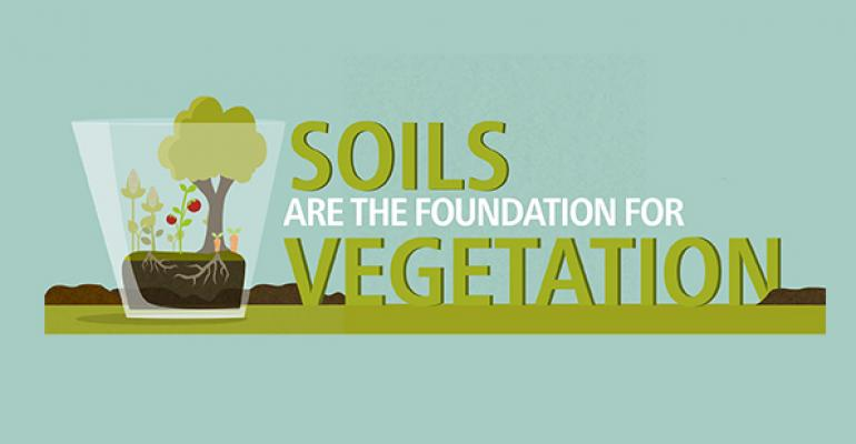 Infographic: The foundation of healthy soils