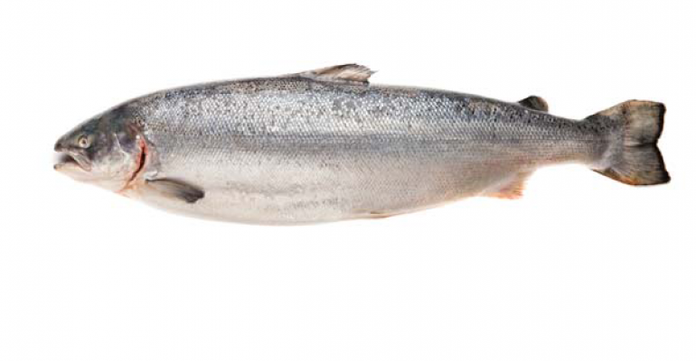Retailers say no to GE salmon