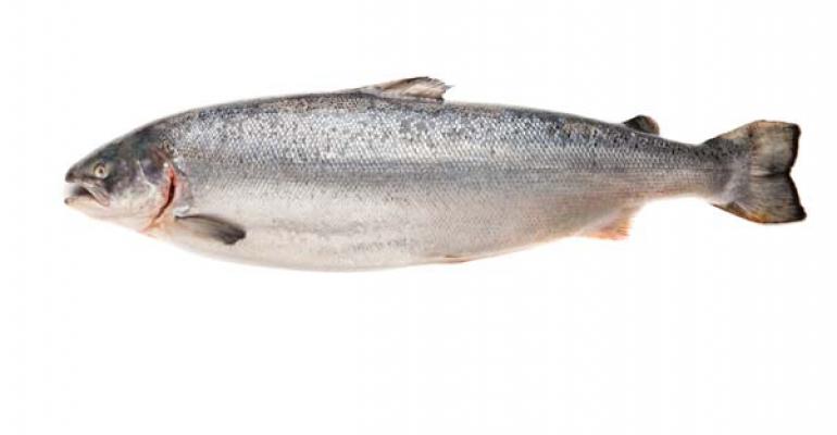 Retailers say no to GE salmon