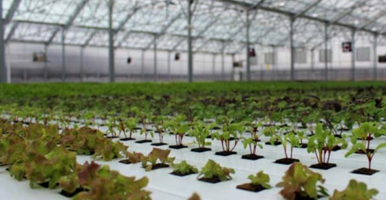 Grocery and a greenhouse: How BrightFarms plans to shorten the produce supply chain for retail