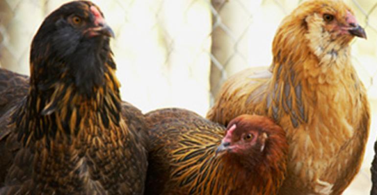 cargill poultry