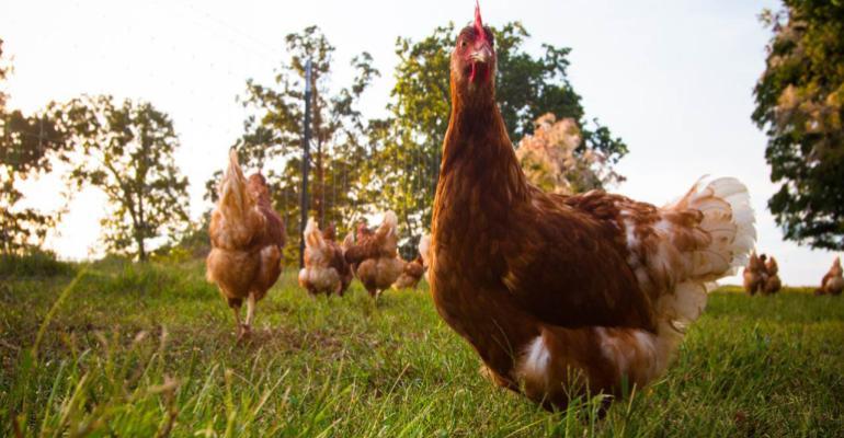 Vital Farms pasture-raised eggs