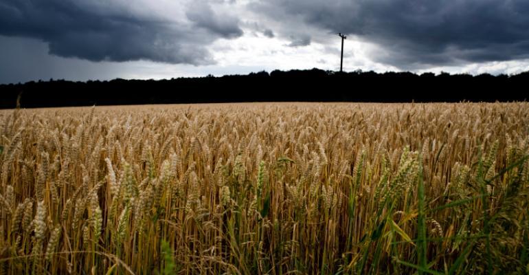 wheat field rain storm
