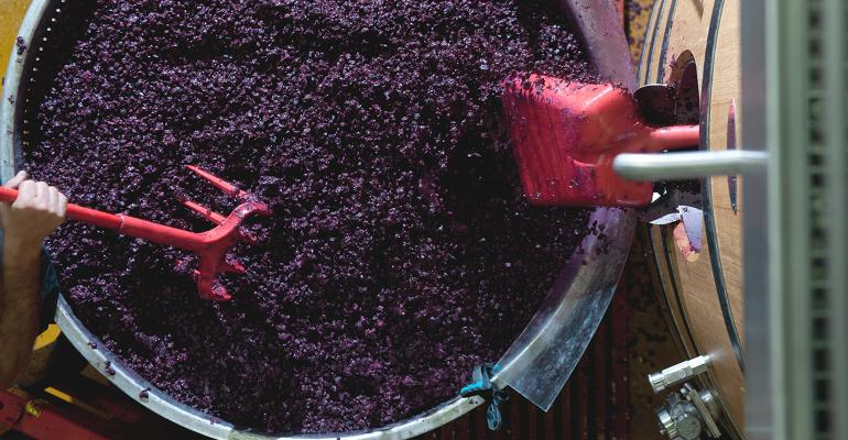 working grapes for natural wine