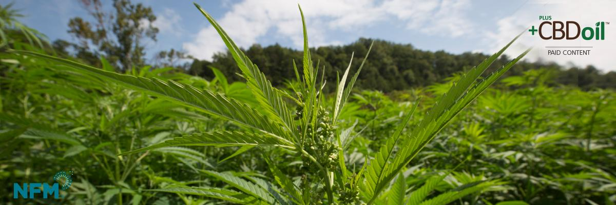 Hemp opportunity: cropping up everywhere [eGuide]