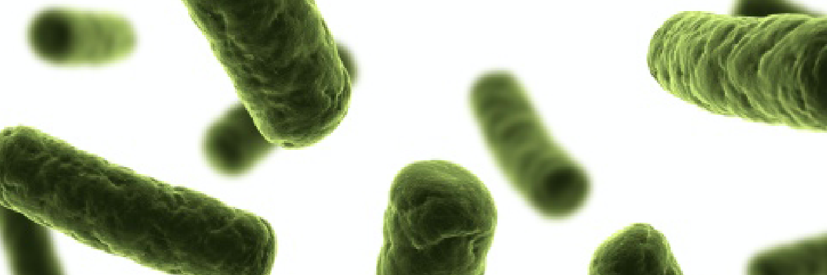 Cultivate your probiotic performance: Market trends and innovative solutions - White paper