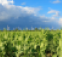 Farming Crops and Blue Sky