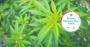 Spark Change Trends endocannabinoid system