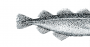 humane fish