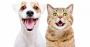 pet care coronavirus 2020 sales