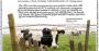 Watchword: Dairy