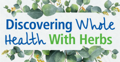 Discovering herbs infographic