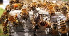 natural products retailers support pollinators with bee hives, honey sales