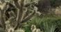 XX cactus (1).png