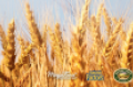 [webinar]  Understanding the non-GMO landscape—and how to navigate it
