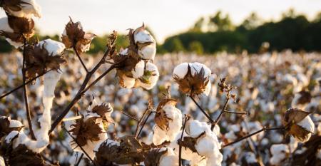 sustainable cotton initiative