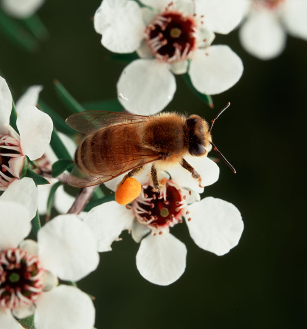 Could it bee? Buzz-worthy potential pesticide ban